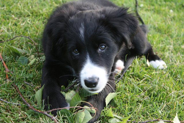 Mila as a puppy